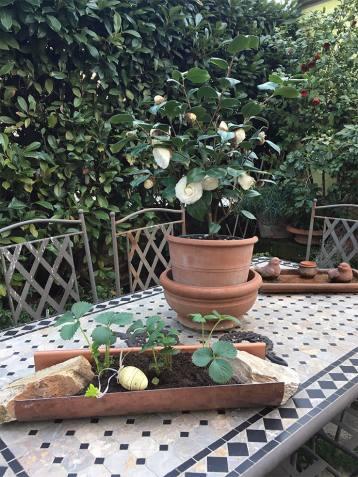 Posizionamento delle fragole su un tavolo per ornamento