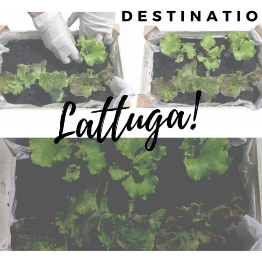 https://verdelario.com/2018/02/22/coltivare-la-lattuga-in-cassetta/