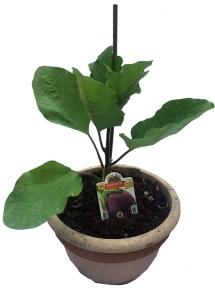 Aggiunta di un asta come sostegno alla pianta