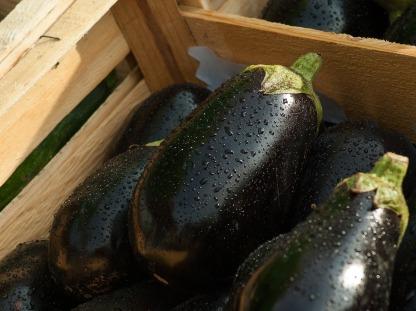 eggplant-1707629_1280
