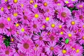 autumn-flowers-3767558_640