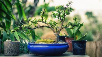 plant-1645812_640