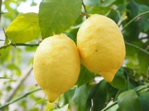 lemon-1117568_1280