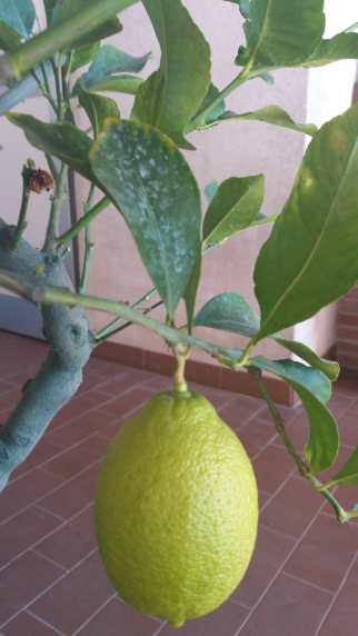 no pesticidi (2)