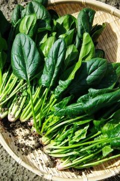 vegetables-1125420_640